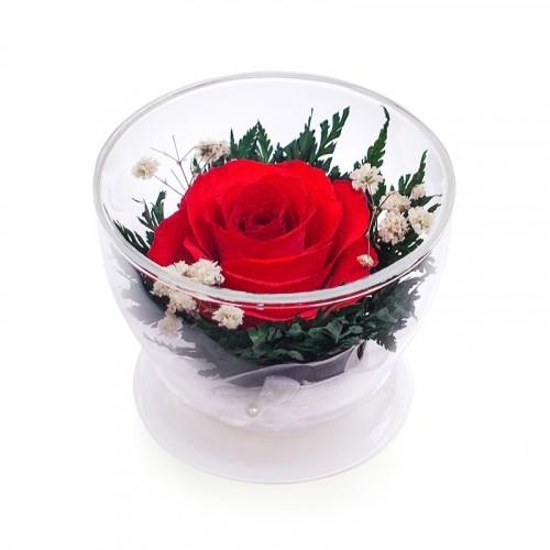 """Цветы в стекле """"Огонёк"""""""